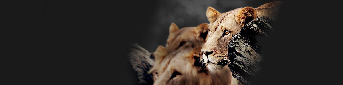 Liontrust ZSL Return of the Kings competition - header
